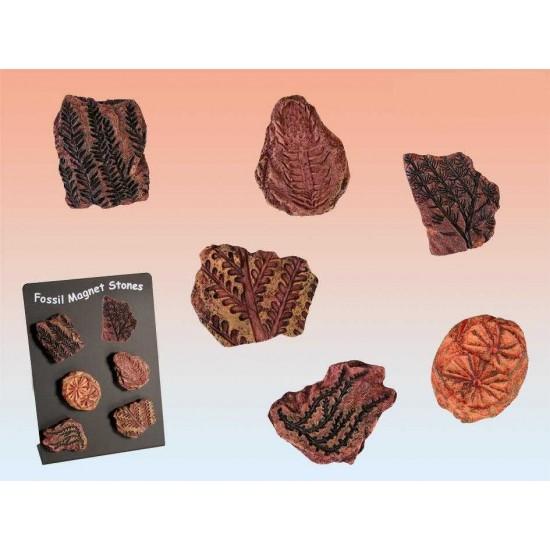 Magnetni fosili 6 kos